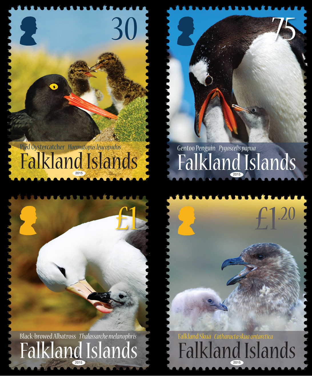 Falkland_Islands_Birds_and_Young_Set_2015_a.jpg
