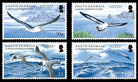 South_Georgia_Albatrosses_Set.jpg